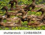 ducks swimming in a balinese...   Shutterstock . vector #1148648654