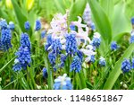 clusters of chubby  little ...   Shutterstock . vector #1148651867