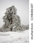 lonely pine forest tree covered ... | Shutterstock . vector #1148686187