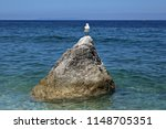 Italy  Seagull On The Rocks.