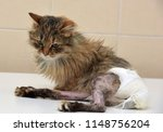 sick cat who suffered an injury ... | Shutterstock . vector #1148756204