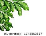 leaves green the left corner on ...   Shutterstock . vector #1148863817