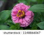 beautiful flowers for your... | Shutterstock . vector #1148866067