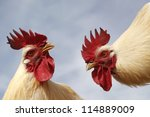 Two Cocks Want Fight Together
