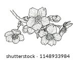 black and white flowering... | Shutterstock . vector #1148933984