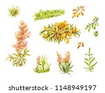 leaves and blade of grass... | Shutterstock . vector #1148949197