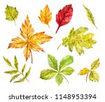 maple  rowan  oak  birch leaves ... | Shutterstock . vector #1148953394