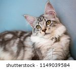 cute cat looking   Shutterstock . vector #1149039584