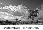 african landscape in the kruger ... | Shutterstock . vector #1149040907