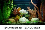 Stock photo a green beautiful planted tropical freshwater aquarium 114904585