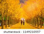 beautiful romantic walkway...   Shutterstock . vector #1149210557