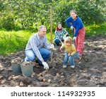 Happy family harvesting potatoes in vegetable garden - stock photo