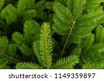 background a texture furry tree ... | Shutterstock . vector #1149359897