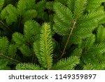fir branches close up texture.... | Shutterstock . vector #1149359897