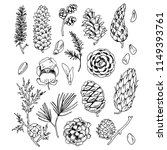 different cones and seeds... | Shutterstock .eps vector #1149393761
