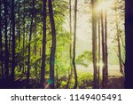 pine forest silhouette against... | Shutterstock . vector #1149405491