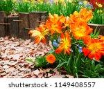 Tulip And Spring Garden