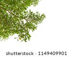 green leaves isolated on white... | Shutterstock . vector #1149409901