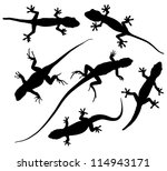 Lizard Silhouette On White...