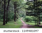 footpath in botanical garden... | Shutterstock . vector #1149481097