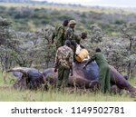 Small photo of Elephant injured by poachers, receiving treatment to remove gunshot, elephant sedated whilst rangers tend to wound, Masai Mara, Kenya, Africa, Africa, May 2013
