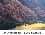 autumn forest on the slopes of...   Shutterstock . vector #1149533501