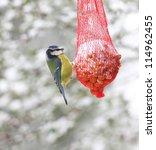 Blue Tit Bird Feeding On A Red...