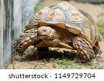 sulcata tortoise is herbivores. ...   Shutterstock . vector #1149729704