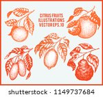 citrus fruits set. hand drawn... | Shutterstock .eps vector #1149737684