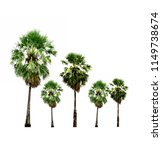 sugar palm trees growing up in... | Shutterstock . vector #1149738674