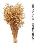 oat ears isolated on white... | Shutterstock . vector #1149739181