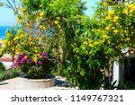 colorful tropical flowering... | Shutterstock . vector #1149767321