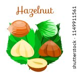hazelnuts with leaves. hazelnut ... | Shutterstock .eps vector #1149911561