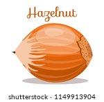 hazelnuts nut. hazelnut peeled... | Shutterstock .eps vector #1149913904