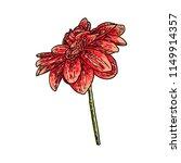 dahlia flower. botanical black... | Shutterstock .eps vector #1149914357