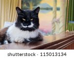 serious cat with yellow eyes | Shutterstock . vector #115013134
