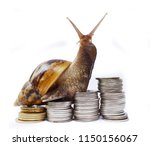 Small photo of Brown snail climbing the pile of coins on white background , Financial with development and commit business concept , Victory and success from patience , Slow economic growth
