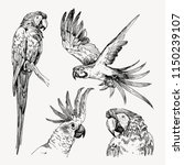 set of hand drawn sketch black... | Shutterstock .eps vector #1150239107