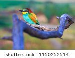 exotic bird sitting on a branch ... | Shutterstock . vector #1150252514