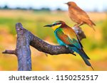 color and red bird sitting on a ... | Shutterstock . vector #1150252517
