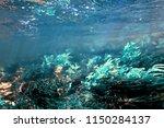 Algae In The Ocean Underwater...