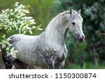 Portrait Of A White Gray Horse...