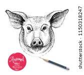 hand drawn sketch pig head... | Shutterstock .eps vector #1150318247