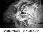 the waiting cat | Shutterstock . vector #1150365644