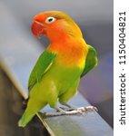 cute domestic bright bird | Shutterstock . vector #1150404821