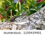 spotted beige and black lizard... | Shutterstock . vector #1150419401