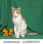 red with white cat and yellow... | Shutterstock . vector #1150507574