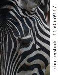 zebra head detail | Shutterstock . vector #1150559117