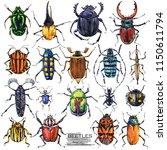 beetles hand drawn watercolor...   Shutterstock . vector #1150611794