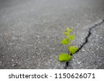 the tree was born and grew from ... | Shutterstock . vector #1150626071